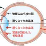 近視の原因は?老眼の原因は?近視と遠視の違いは?